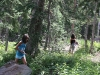 Forest Playgrounds