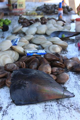 What a selection of clams!!!