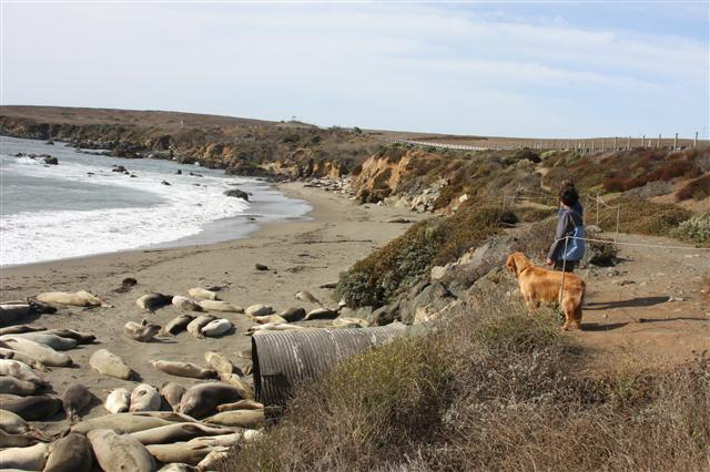 Hobie, these seals are a lot bigger than you...
