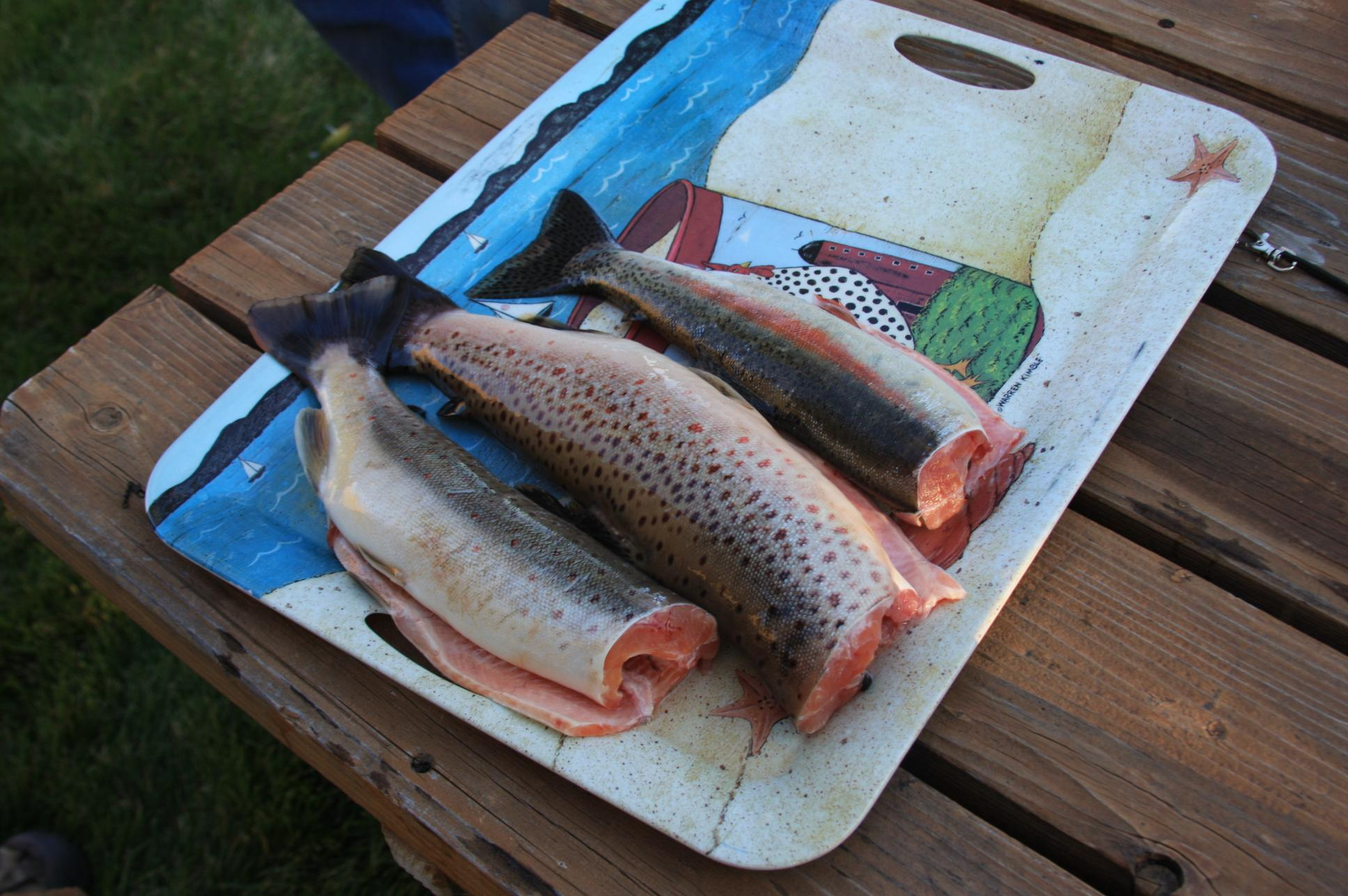 Brook, Brown or Rainbow for Dinner?
