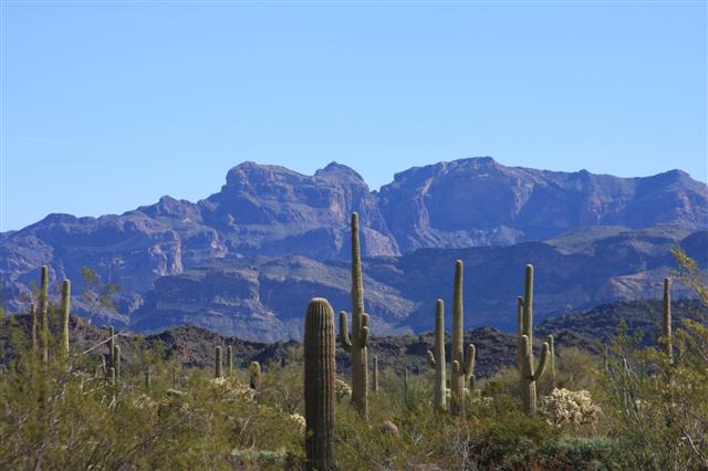 Northern edge of the Sonoran Desert