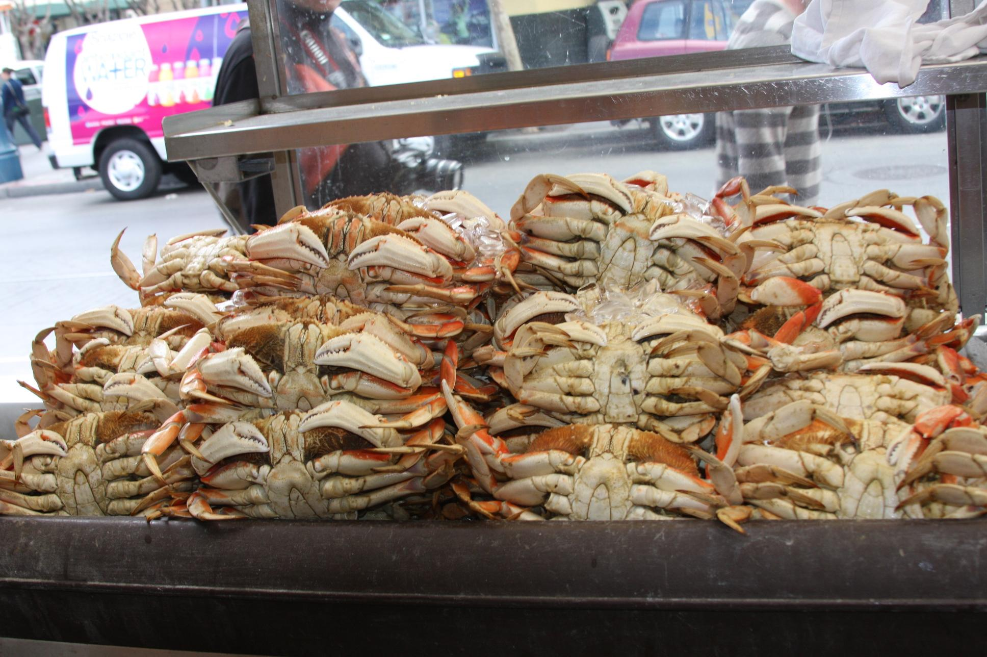 Lots of Crab
