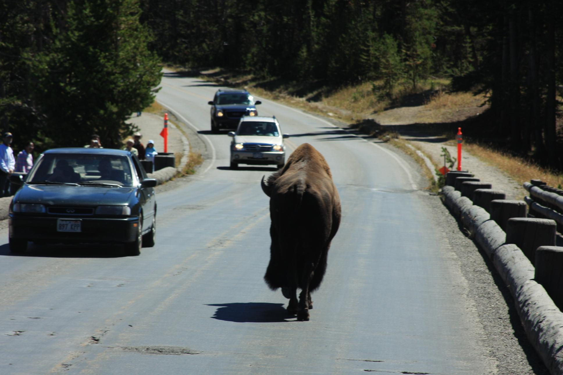 Yellowstone Traffic Hour